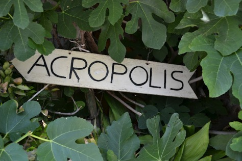 sign for Acropolis nestling beneath the fig tree