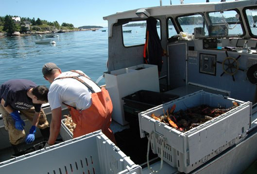 111209-lobster.jpg